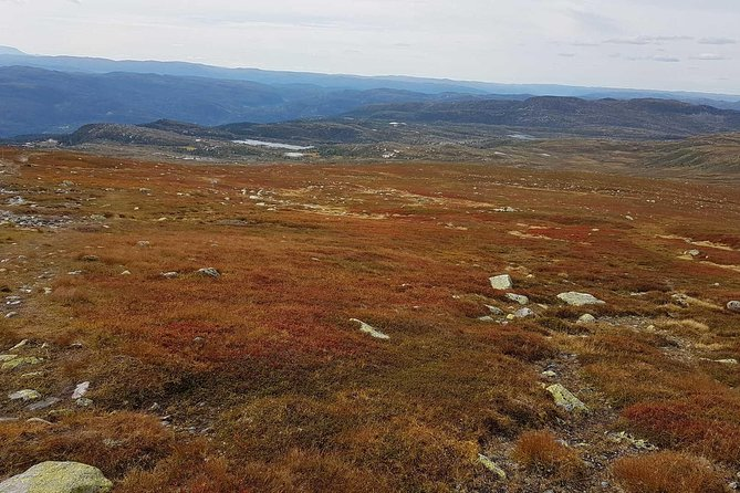 Wild reindeer safari at Norefjell photo 2