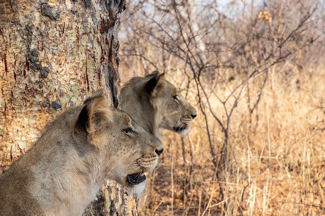 Lion and Game Park Management Project