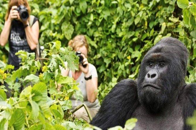 6 Days Uganda Gorilla Trekking & Hiking to Dian Fossey Tomb in Rwanda.