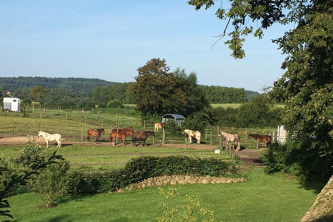 Riding holidays at Hof Schierensee