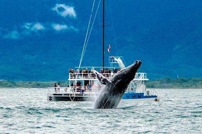 All Inclusive Catamaran Eco Adventure from Manuel Antonio