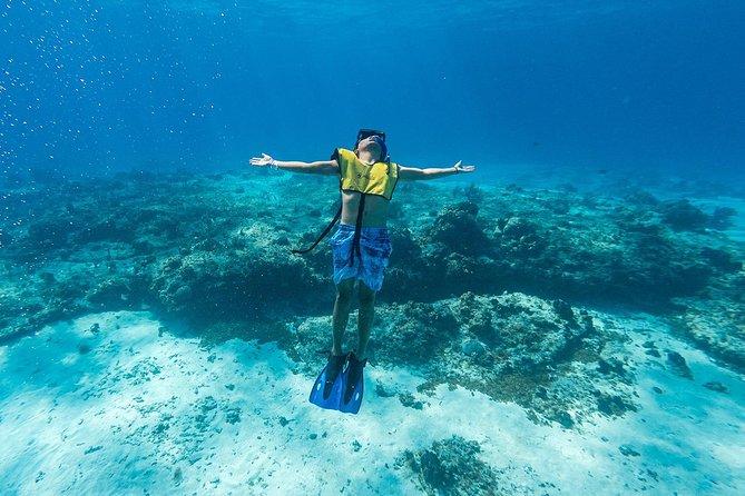 Cozumel Snorkel Tour from Cancun: Two Reefs & Playa Mia Grand Beach Park