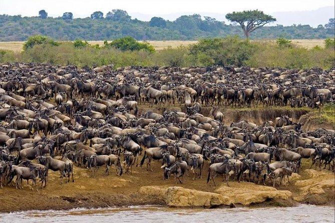 3 Days Masai Mara Private Package