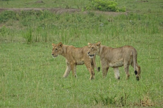 12 Days Memorable Experience tour in Uganda photo 7