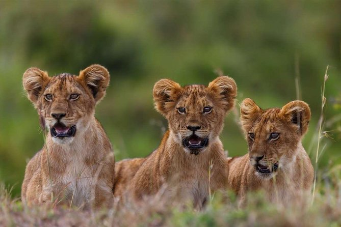 4 Nights/5 Day Masai Mara NR, Lake Nakuru NP, and Lake Naivasha Budget Tour