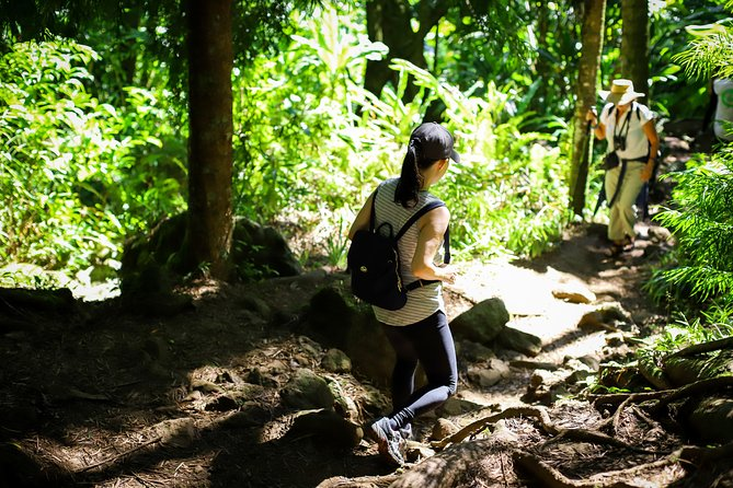 Nature and You: Manoa Valley Hike with Waterfall