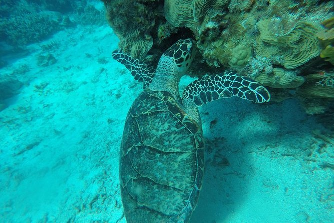 Chala-Michal's Daily Snorkeling Adventures