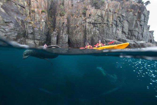 Tasman Peninsula full day kayaking tour