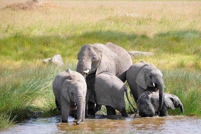 Tarangire,Ngorongoro & Lake Manyara ~ 4 Days