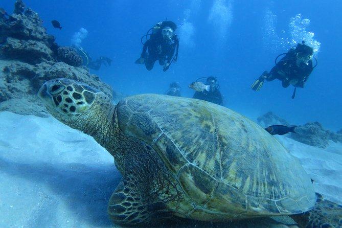 Diving Trips through Sal Island