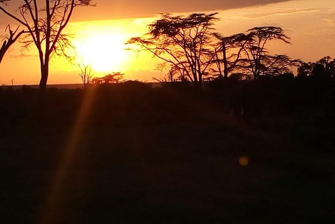4 Day Safari: Serengeti National Park, Tarangire & NgoroNgoro Crater photo 11