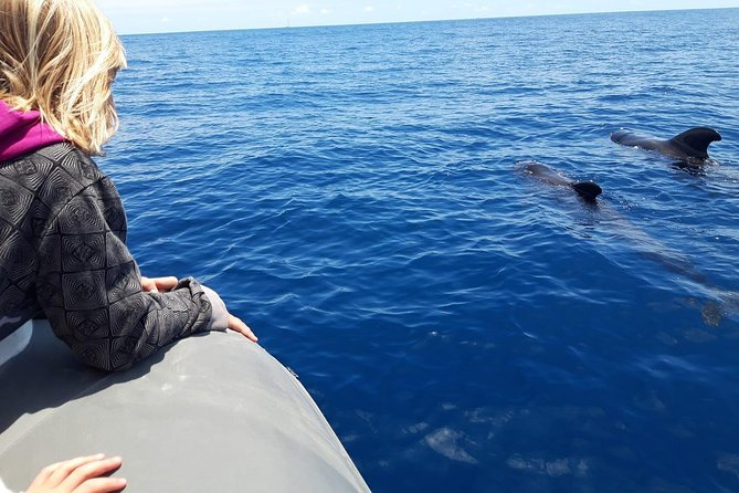 Whale & Dolphin Watching + Swimming, Snorkeling, Masca And Los Gigantes.