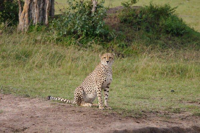 Lake Nakuru National Park Day Tour