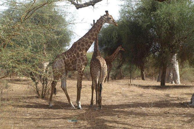 Half-Day Somone Lagoon and Bandia Park Safari from Dakar