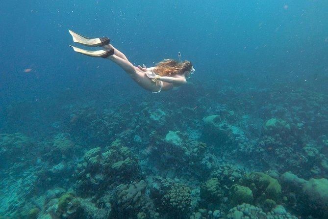 Eco-friendly private snorkel tour past a pristine coral reef