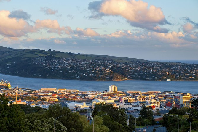 Taste of Dunedin City Sights and Peninsula Nature Tour