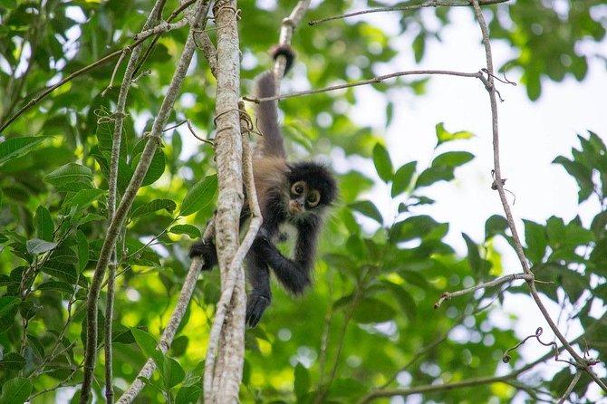 Coba & Monkey Sanctuary Punta Laguna Private Tour