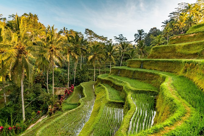 Private Ubud Day Tour