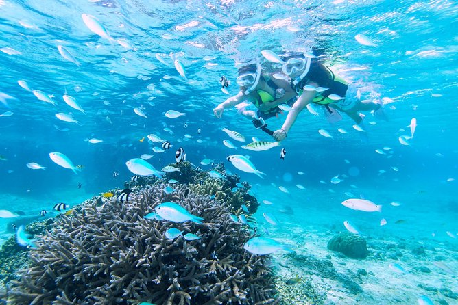 Miyakojima / Snorkel tour to enjoy coral and fish