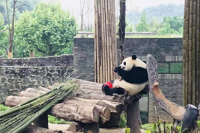 Chengdu Day Trip of Giant Panda and Local Culture Experience photo 2