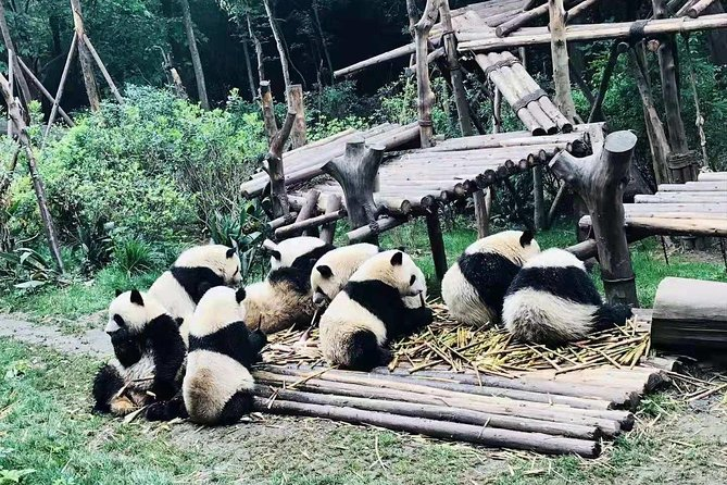 Chengdu Day Trip of Giant Panda and Local Culture Experience photo 4