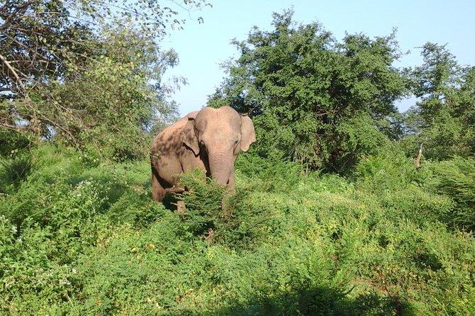 Wilpaththu Safari Full Day Tour