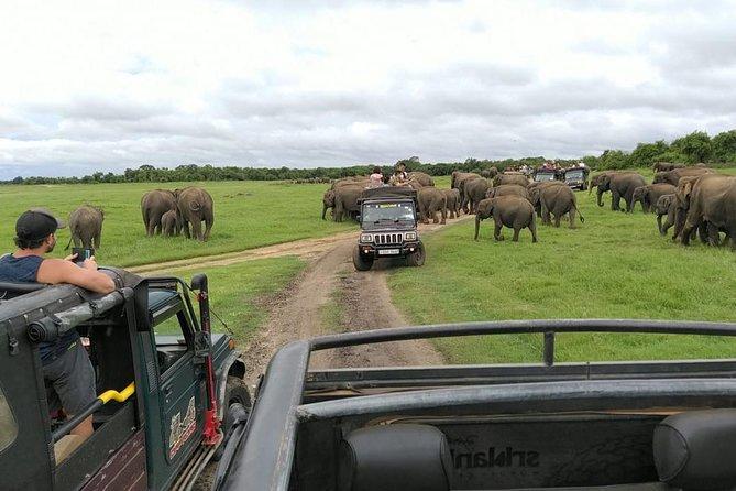 Day Tour to Sigiriya,Cave,Pidurangala with Safari from Dambulla / Sigiriya