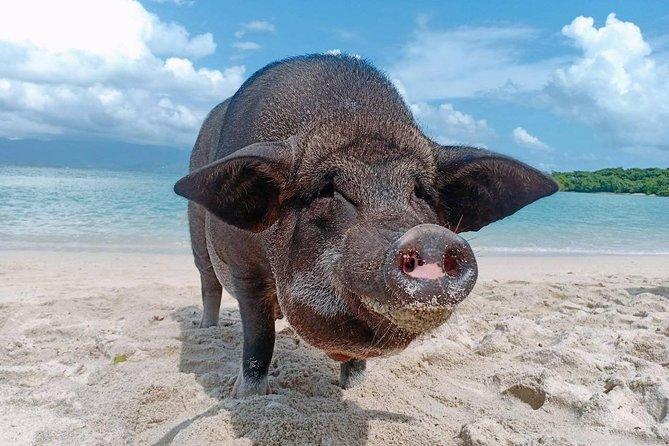 Pig Island & Koh Tan Tour by Speed Boat (Snorkeling & Kayaking)