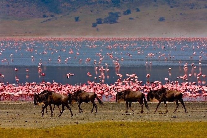 4 Days / 3 Night Safari to Ngorongoro / Serengeti photo 3