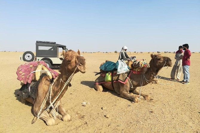 An Non Touristic Half Day Camel Safari photo 2