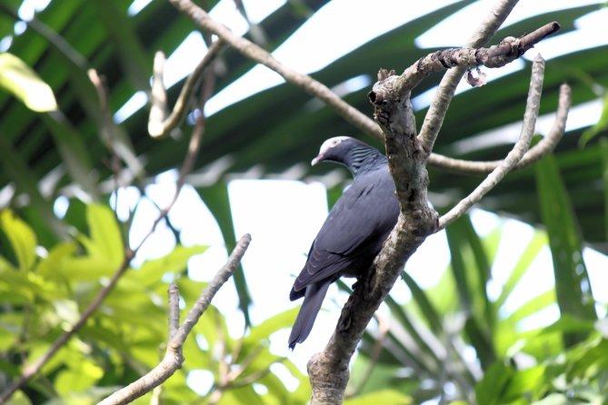 Bird Feeding Sanctuary & Montego Bay Highlight Tour