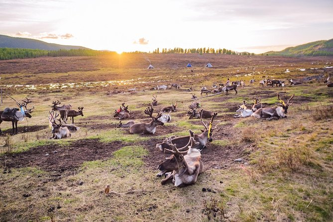 The Last Reindeer People of Northern Mongolia (June-July 2020)