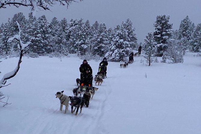 Dogsledding daytime