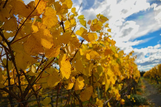 All-Inclusive Waipara Region Wine Tour from Christchurch