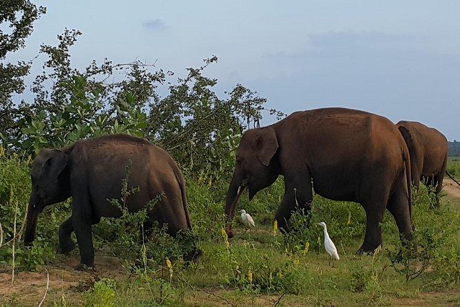 Ella To Udawalawa Safari