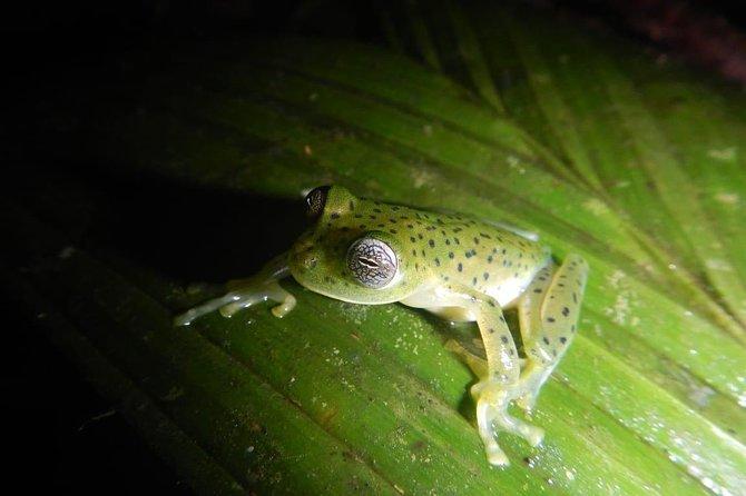 Panamanian Jungle Night Hike