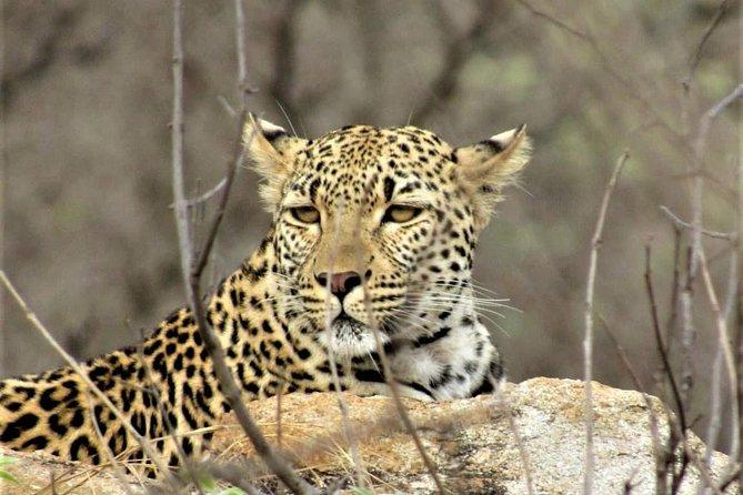 Afternoon Kruger National Park Safari