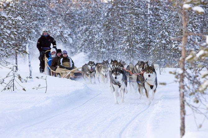 Husky safari in Murmansk