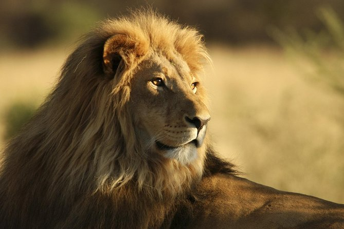 Tsavo Explore Safari