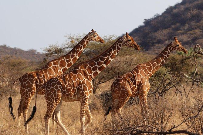 1 Day Tsavo East Safari from Mombasa , Watamu or Diani