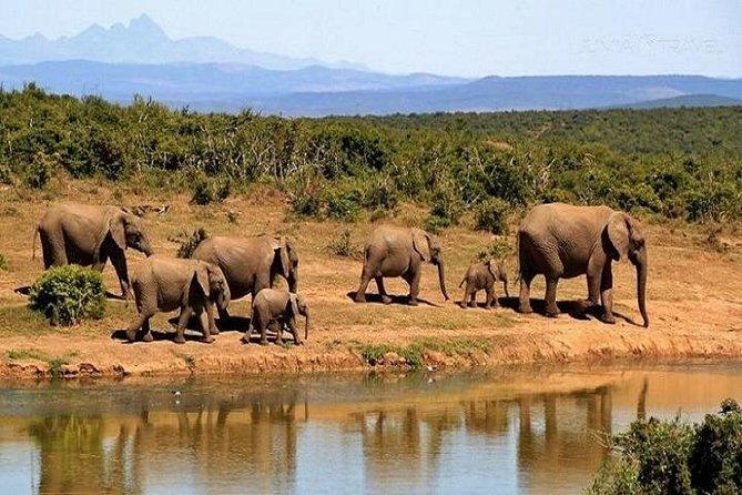 3 days-Mara Wildlife spotting