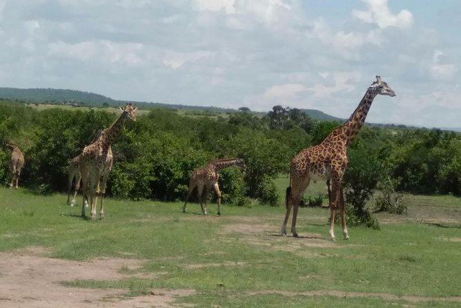 7days 6nights through Mara to Amboseli