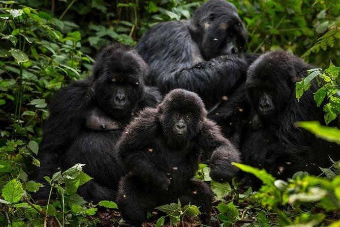 5-Day Gorillas, Lions and Water Safari in Uganda