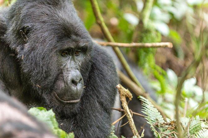 3 Day Rwanda Gorilla Safari - mid-Range Safari