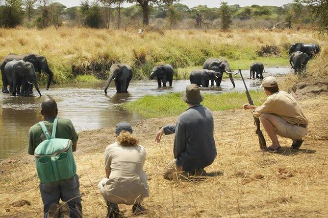 6 Days Tanzania Wildlife Safari and Out Door Adventure