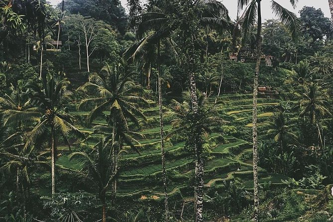 Ubud highlight tours