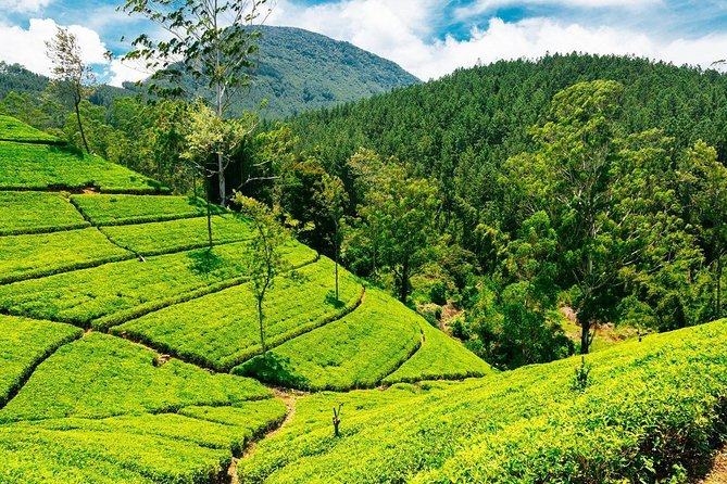 Picture Tour Nuwara Eliya - ASY Tours