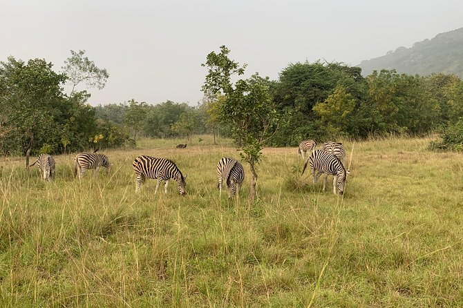 Escape to Shail Hills and Akosombo: Wild Animals, Caves & The View Of Volta Lake