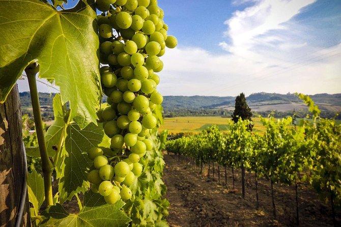 Kakheti Wine One Day Tour