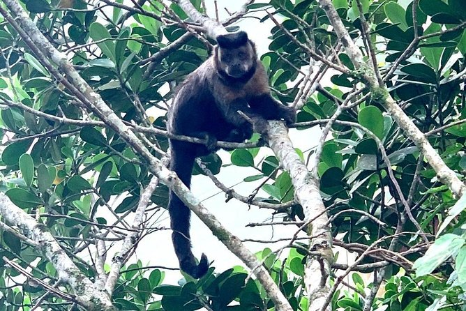 Monkey at Tijuca Forest!